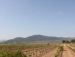 Bodega Santa Catalina del Maña