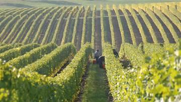 The Algarve - Must Visit Wineries