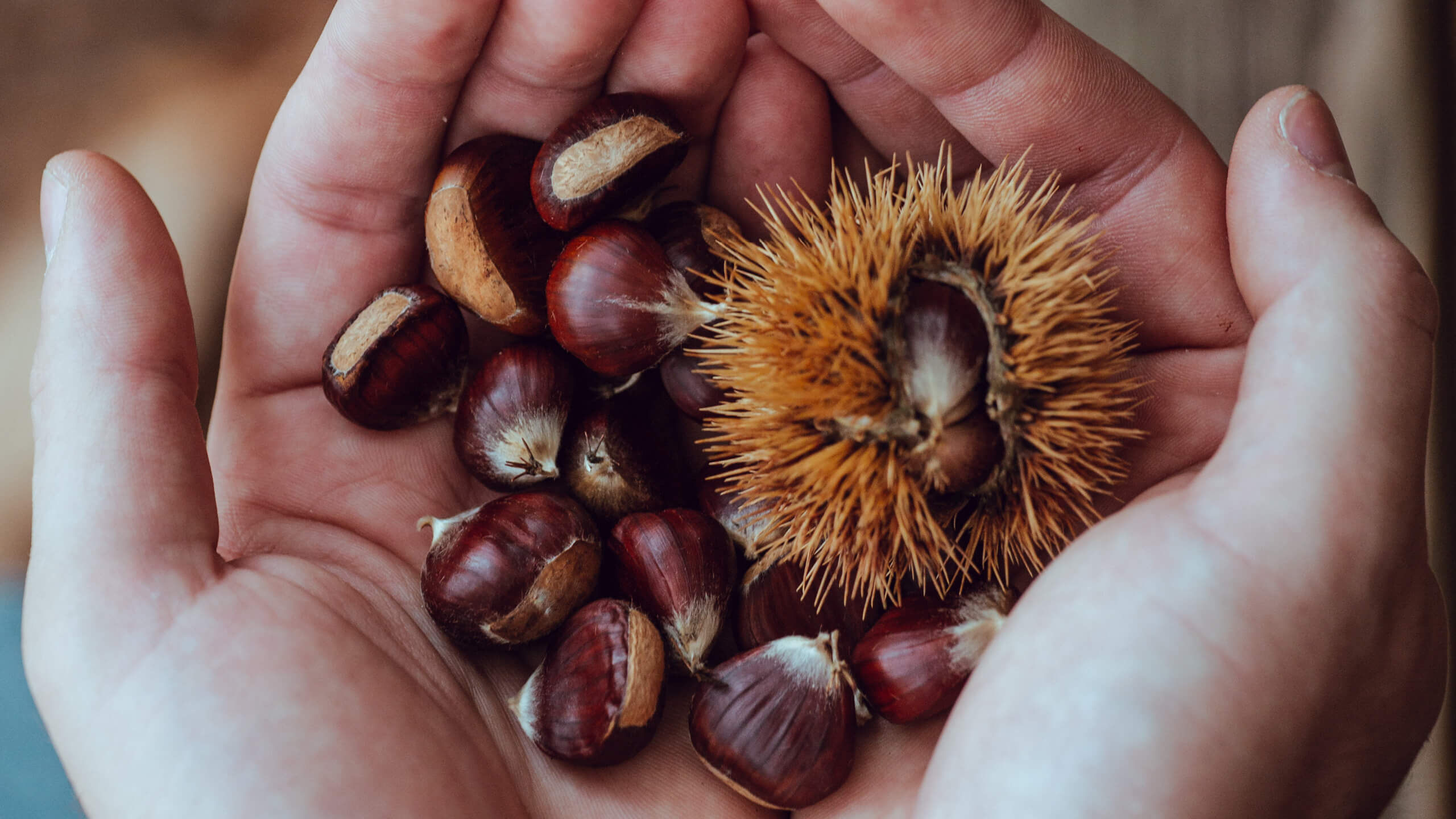 chestnuts picked