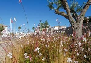 Quinta do Algarvio Village - Exzellente Investitionsmöglichkeit