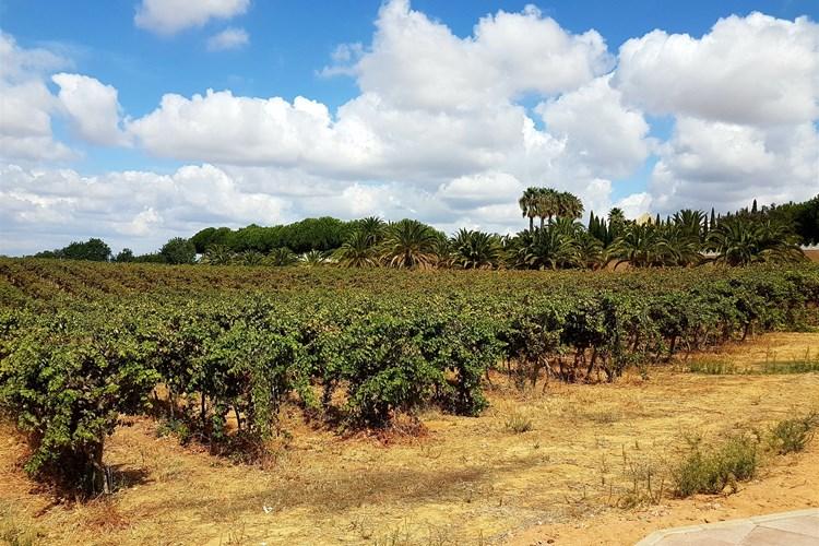 Vineyards from Sir Cliff Richard